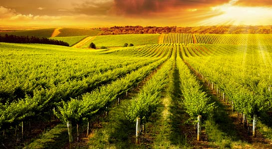 Wine of Australia & New Zealand