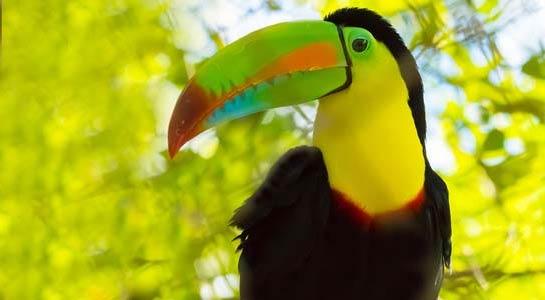 Costa Rica Escape