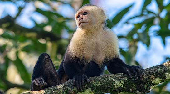 Monkeys, Jungles and Volcanoes