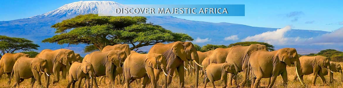 Cosmos: Discover Majestic Africa Tours