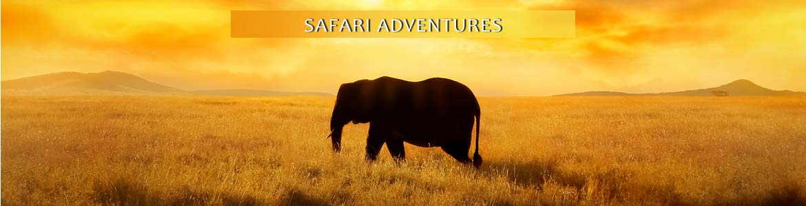 Tauck Tours: Safari Adventures