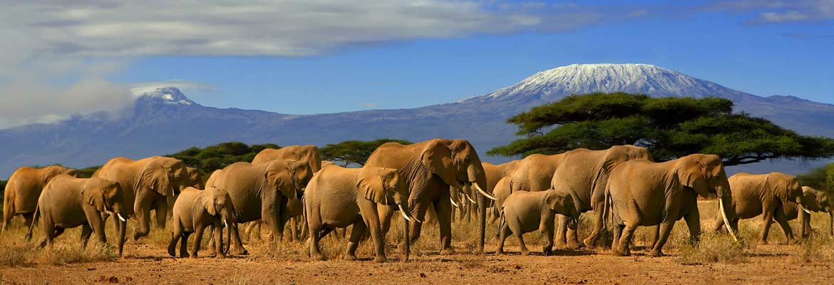 Escorted Land Tours to African Safaris