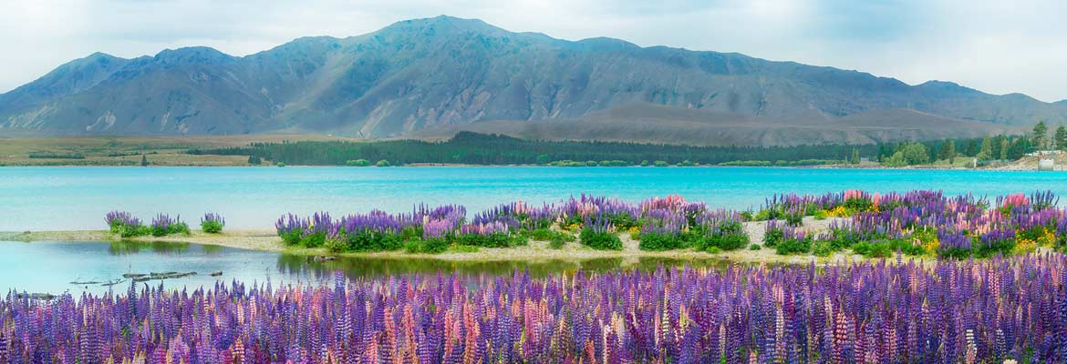 Escorted Land Tours to New Zealand and Australia